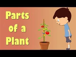 Parts of a Plant. Partes de una planta (Videos for Kids)